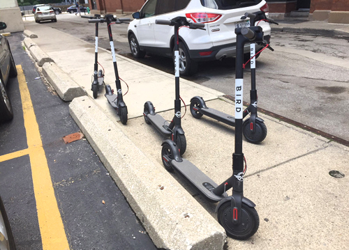 Bird Scooters on Pearl Street