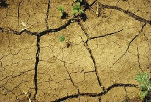 More than 80 percent of Indiana is in severe drought.