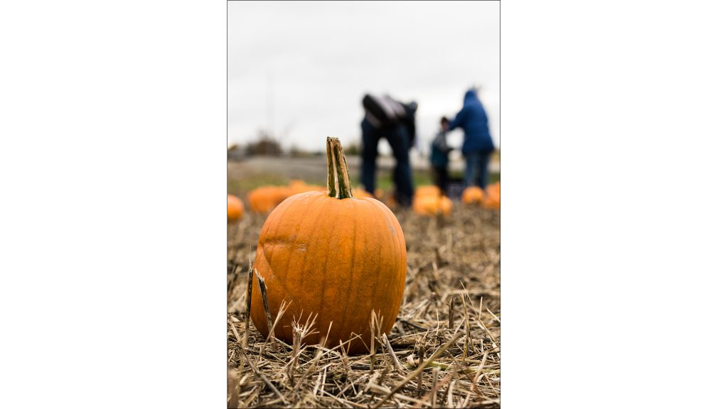 FFA students sell the pumpkins as a fundraiser.