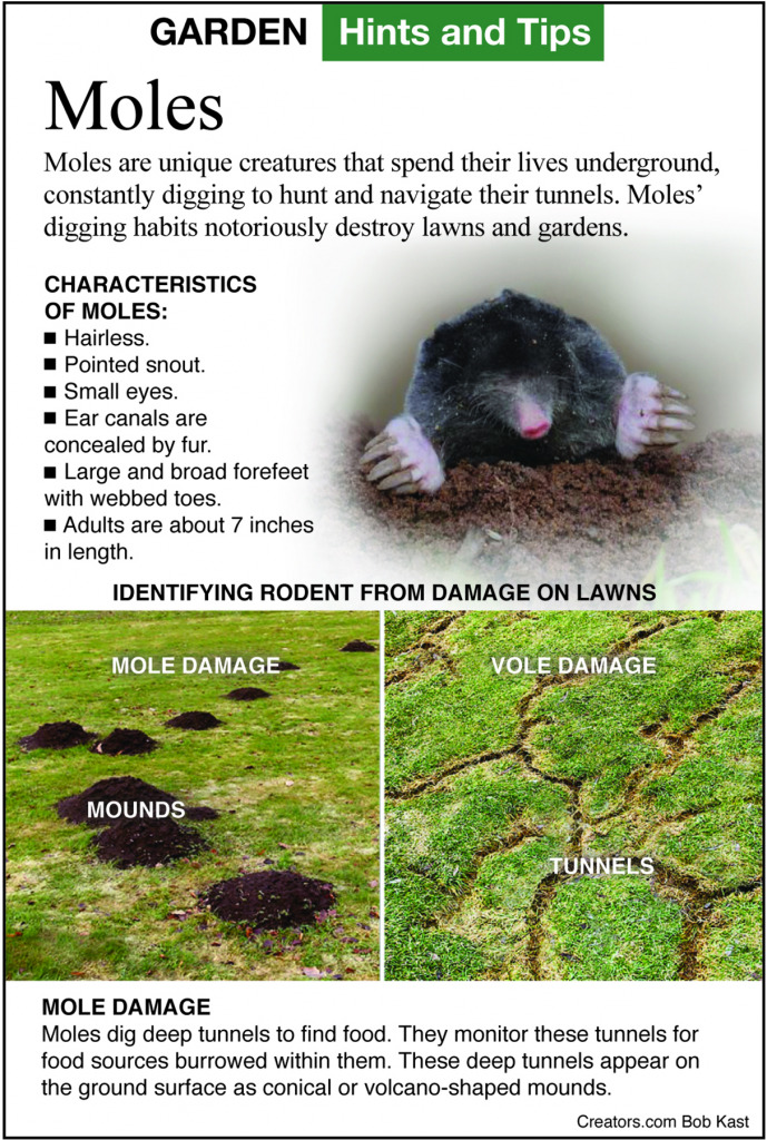 How to control moles in your yard - Indianapolis Business ...